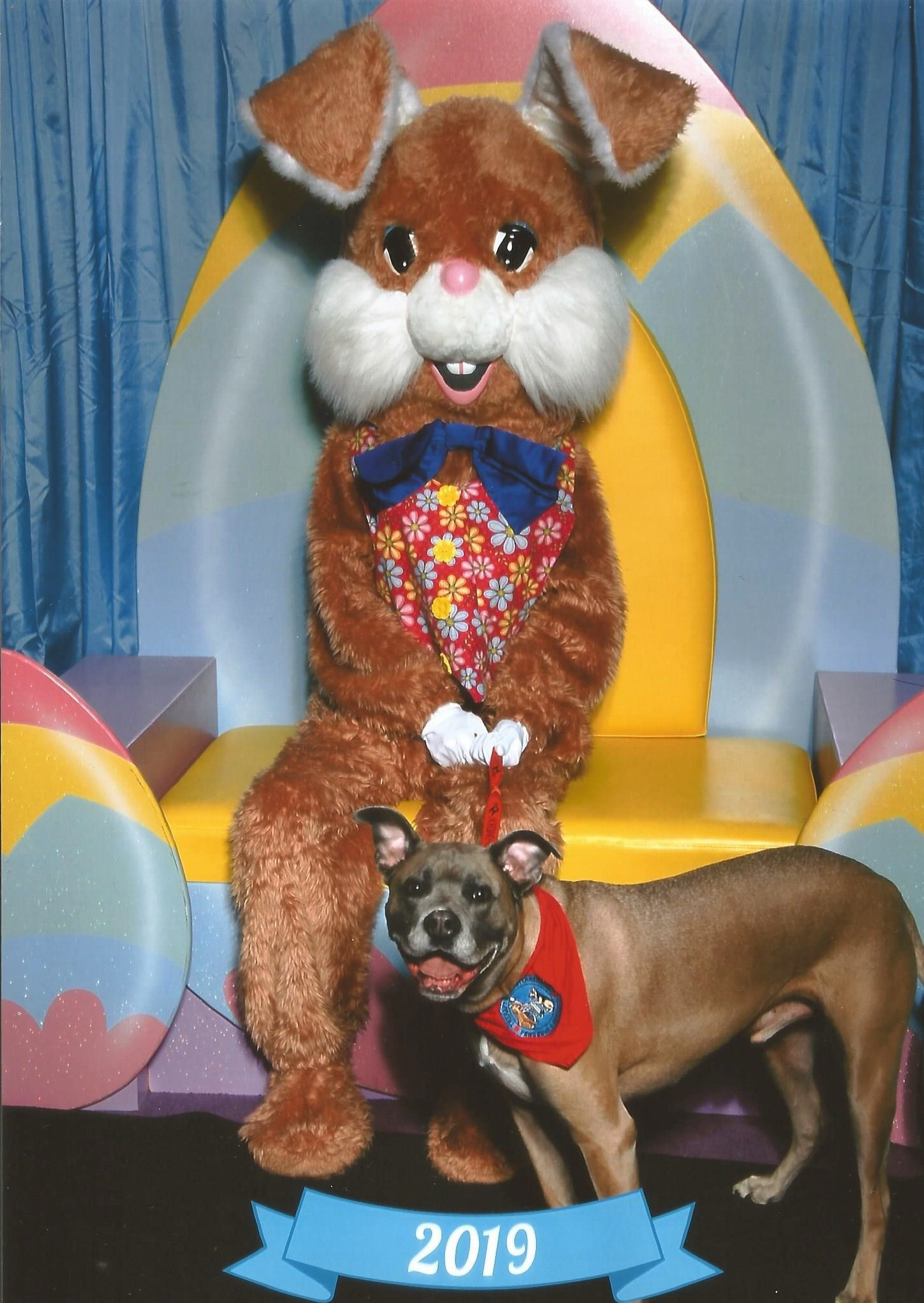 747da1576b81 Medical Pet Shirt For Dogs Uk - DREAMWORKS